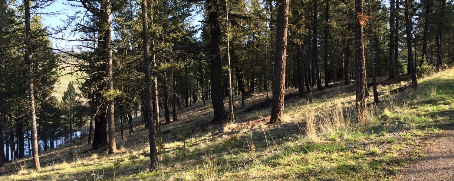 cropped-cropped-FOREST1.jpg